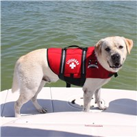 Neoprene Doggy Life Jacket by Paws Aboard®